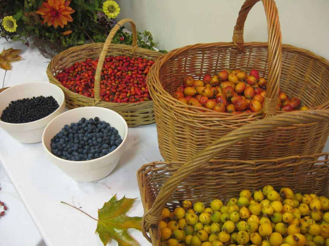 how to forage the hedgerows