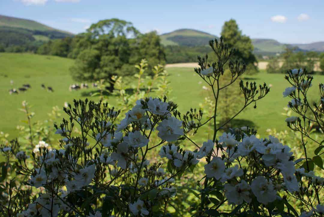 We Visit The Ribble Valley And Share Our Favourite Finds