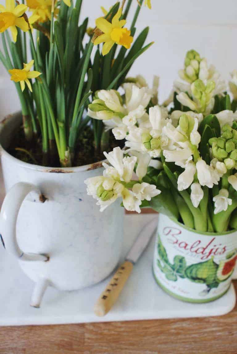 love this modern rustic look with vintage enamel oil pourer planted with spring daffodils and white hyacinths in old pretty tin