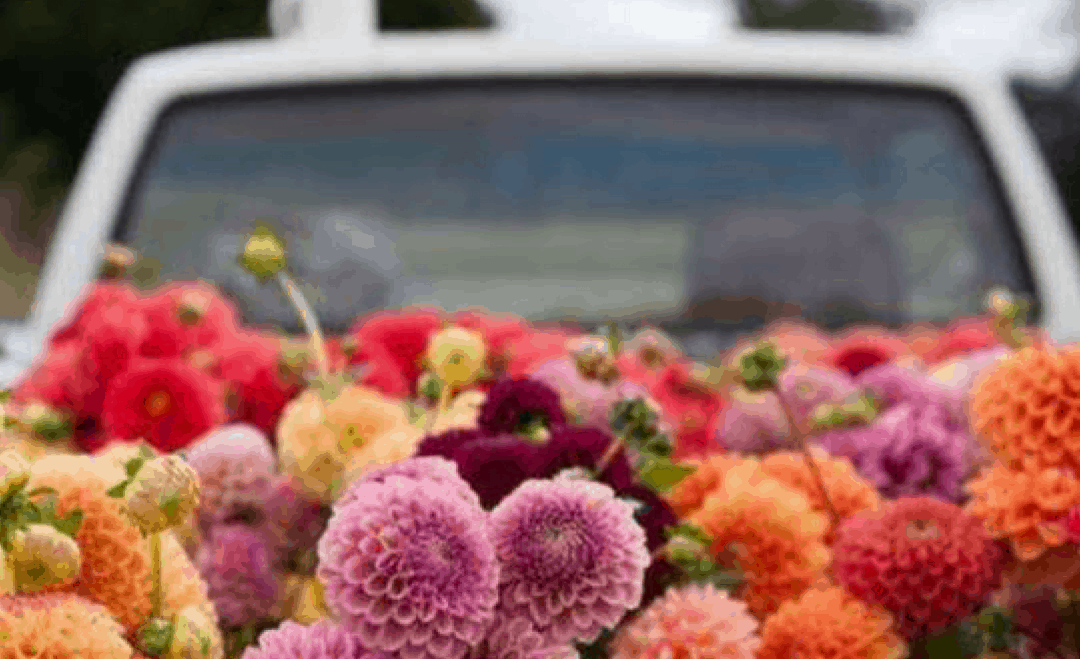 How To Arrange Autumn Flowers With The Sussex Flower School