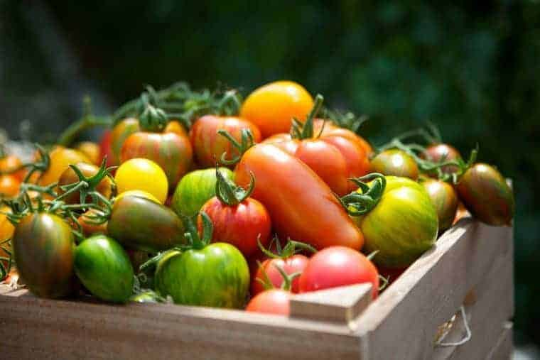 isle-of-wight-tomatoes