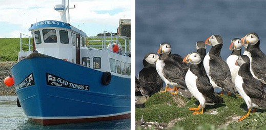 Farne Islands Boat Trip