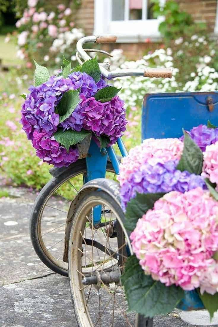 country wedding flowers idea - love the blowsy hydrangea combined with vintage bicycle to create a pretty rustic look. Click through for more inspiring ideas for creating country wedding flowers