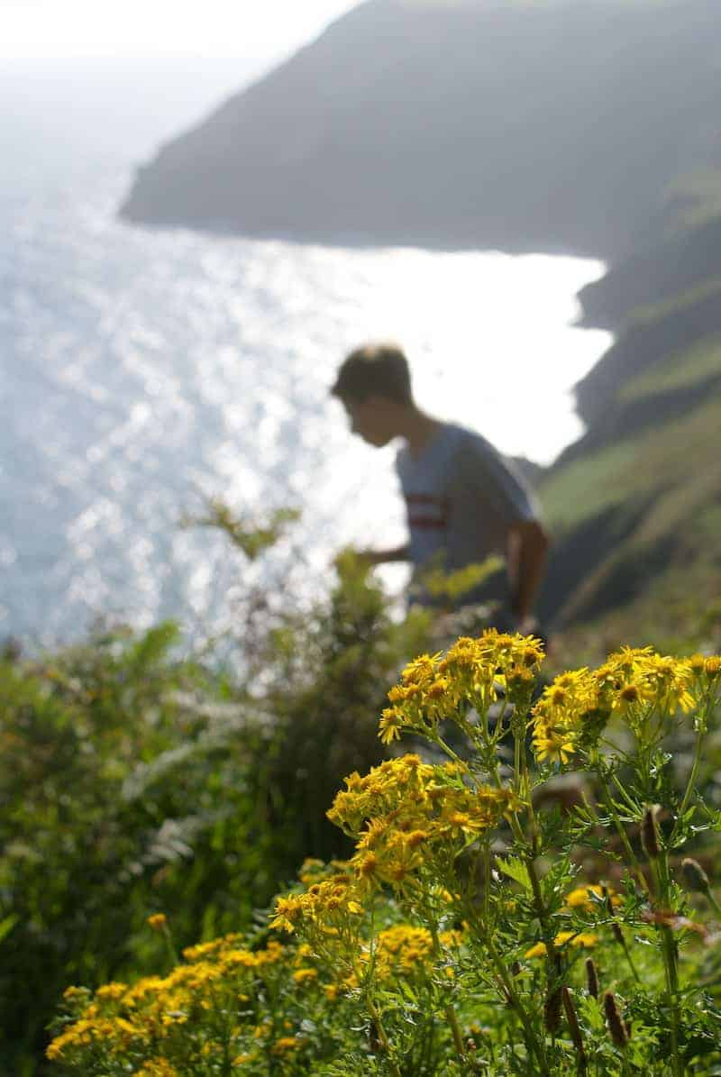 wild yellow flowers by the sea in Cornwall