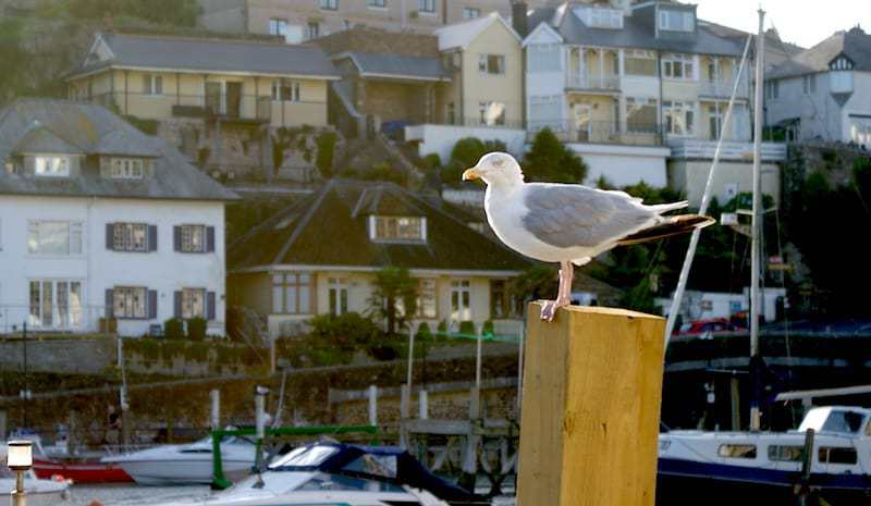 seagull on wooden post beside boats in harbour at Looe in Cornwall