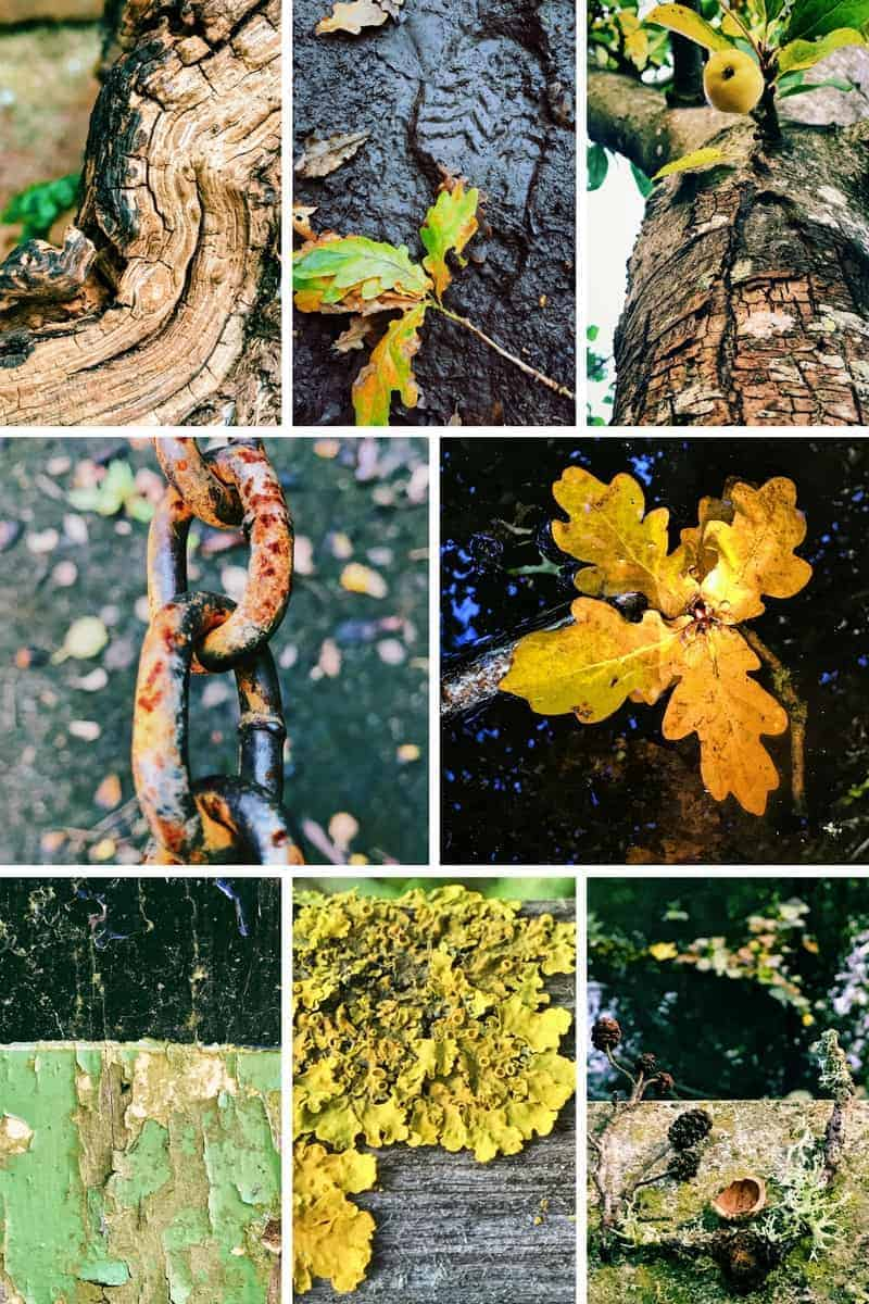 images of autumn texture - click through to see more of my images from my Slow Walks as part of the 5ftinf Consciously Creative course