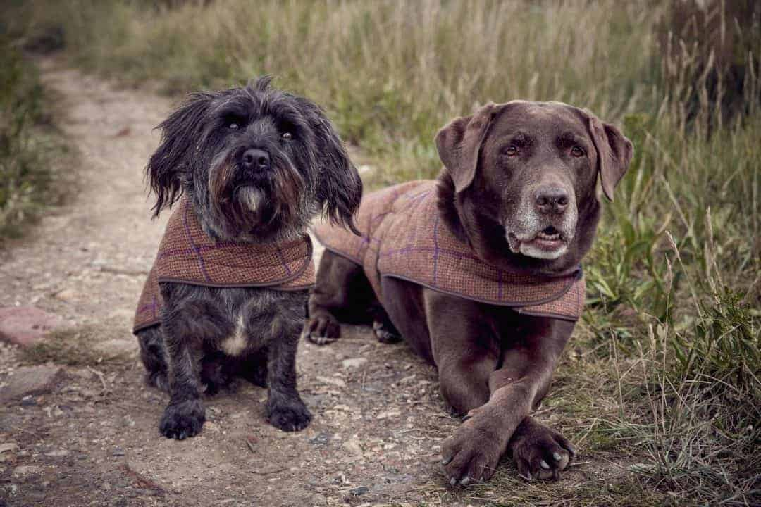 izzy lane dog coats