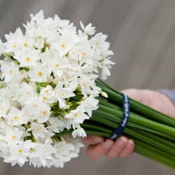white narcissi from the blue box flower company