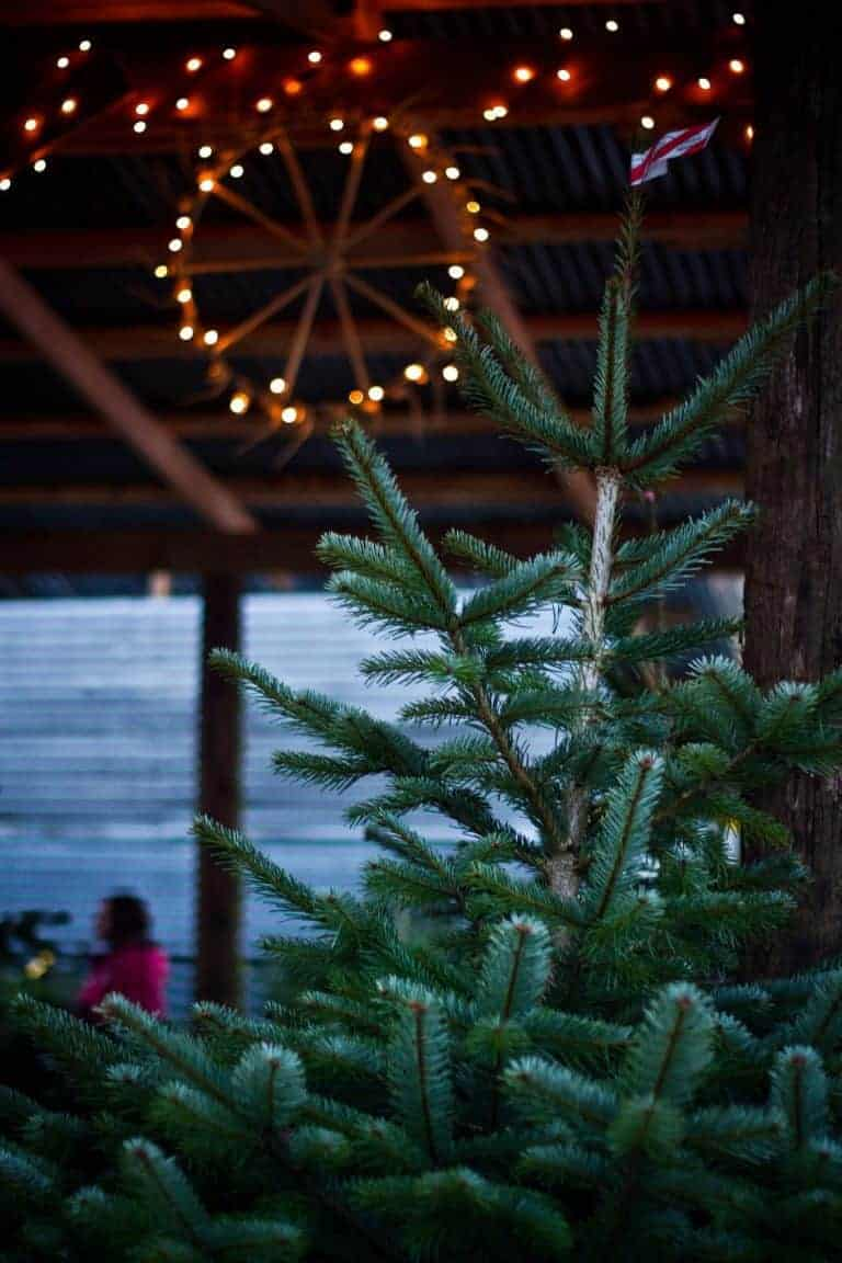 finding the perfect christmas tree garden expert pippa greenwood shares her tips. Click through for more ideas as well as christmas gifts for gardeners that are sure to be well received