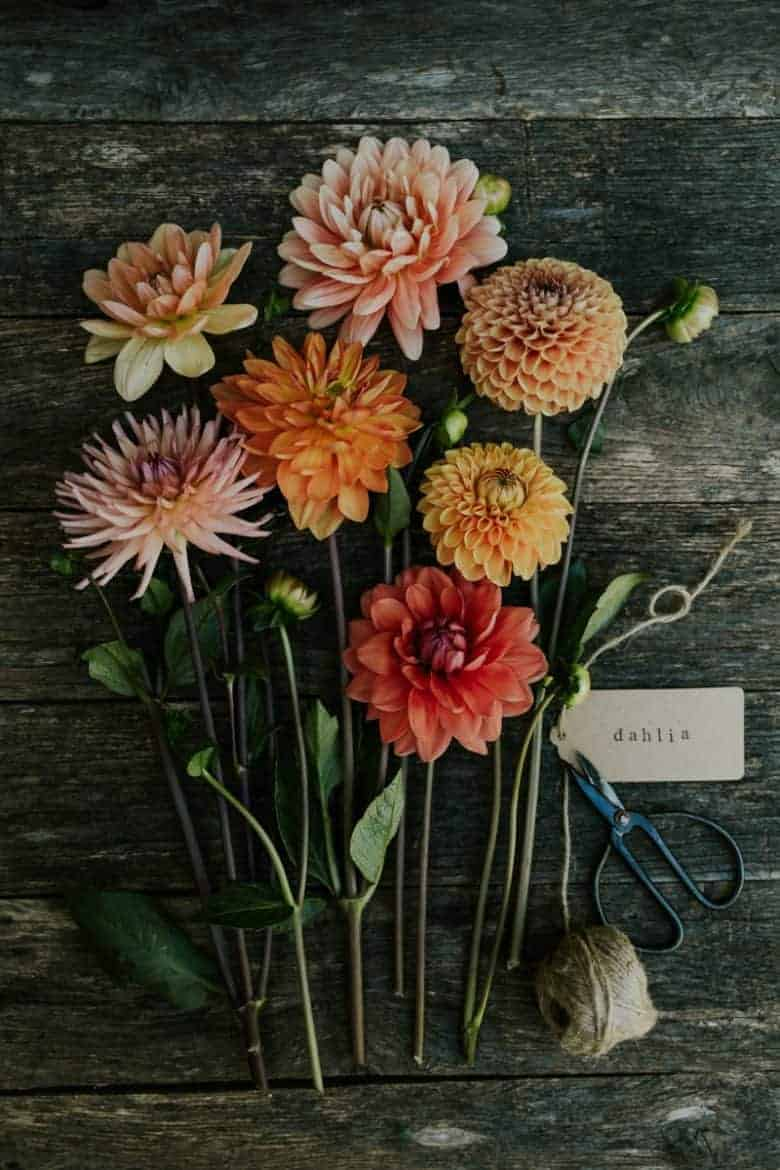flower garden photography workshop course gift voucher with eva nemeth is just one of my favourite gift ideas for gardeners