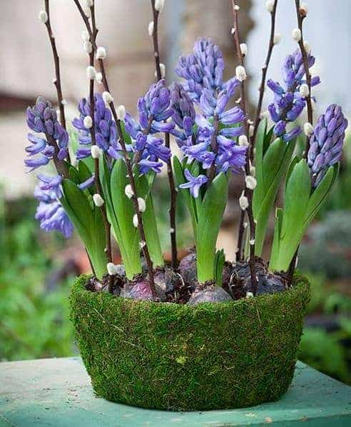 love this blue hyacinth pussywillow spring flower bowl arrangement by sarah raven. Click through for more spring flower arrangement ideas you'll love to try - simple DIY ideas