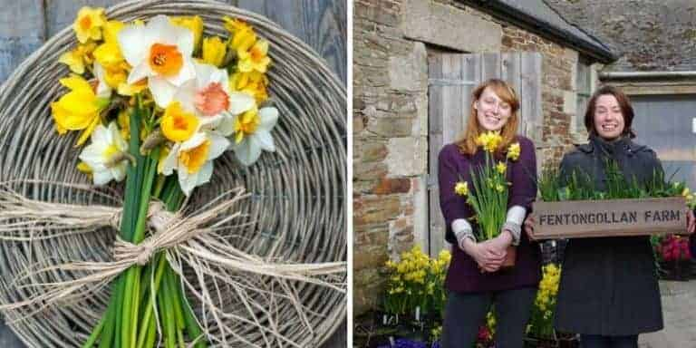 spring daffodils from fentogollan in Cornwall. Click through for more out of the ordinary valentine's gift ideas