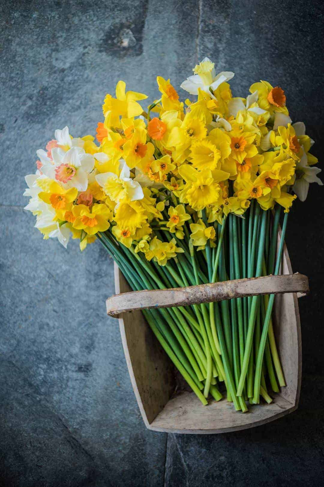 love the rustic look of yellow daffodils and white narcissi grouped informally in a rustic wooden trug. Click through for more spring ideas you'll love