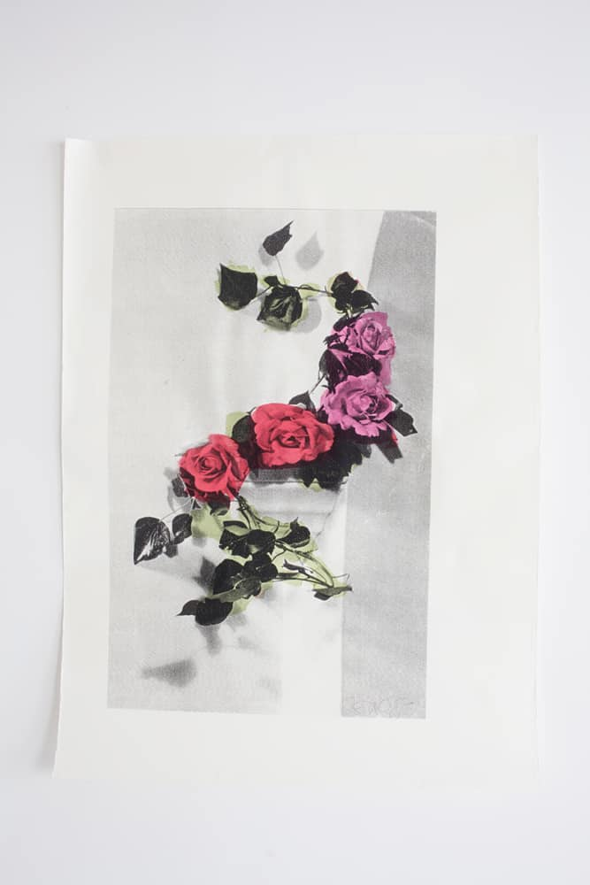 deborah bowness hogarth curve rose print