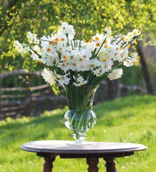 love this large vase white narcissi sarah raven . Click through for more spring flower arrangement ideas you'll love to try - simple DIY ideas