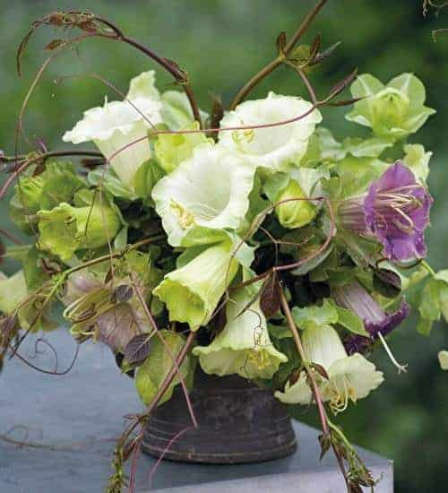 love this spring flower arrangement in lime green whites and purple convolvulus by sarah raven. Click through for more spring flower arrangement ideas you'll love to try - simple DIY ideas