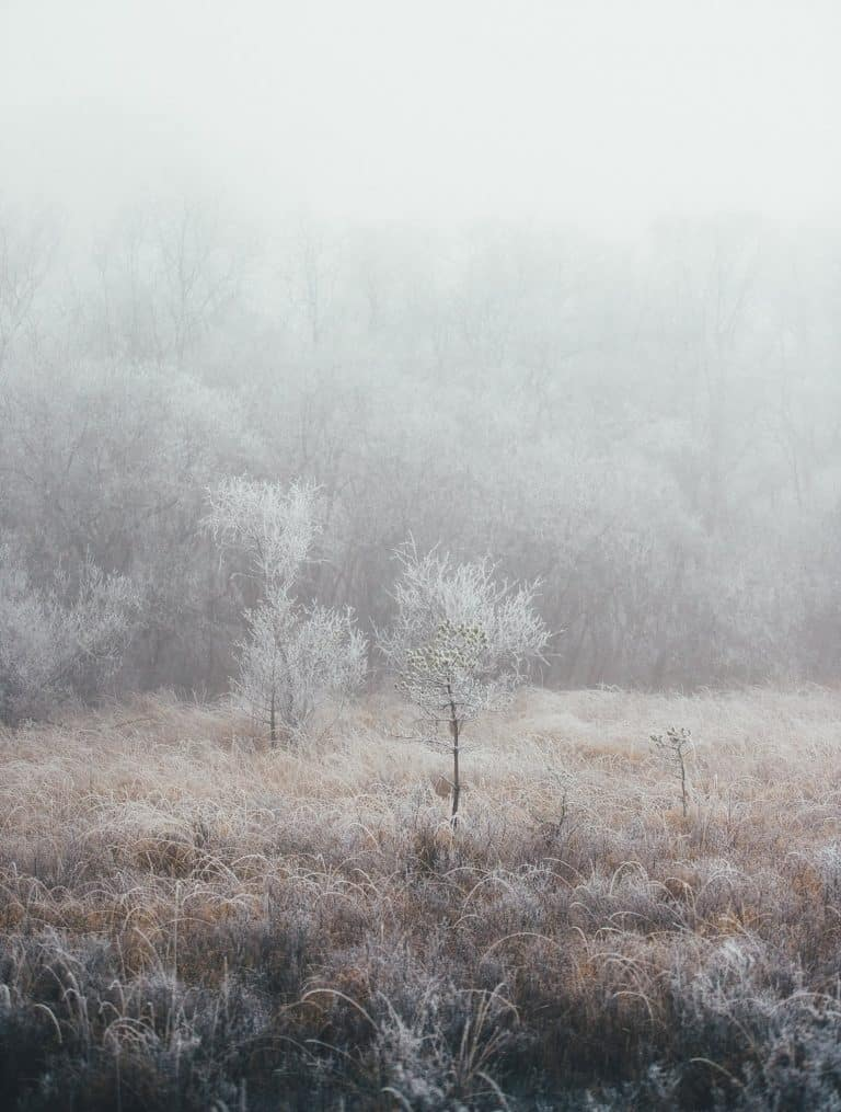 love this frosty tree landscape from creative countryside magazine winter