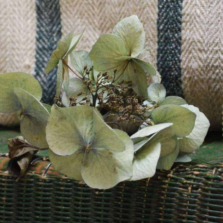 hydrangea with striped linen