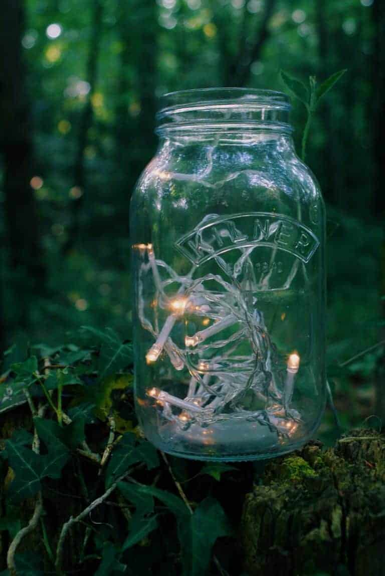 love this lights in jar in forest