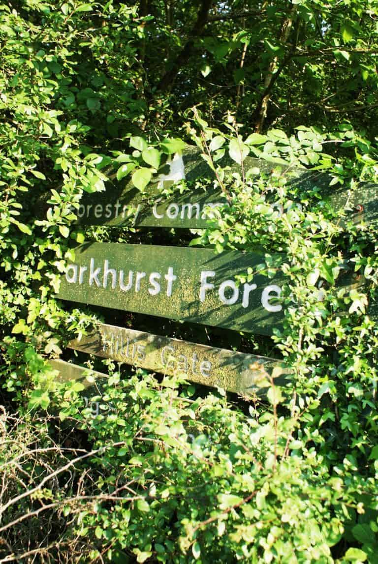 parkhurst forest isle of wight