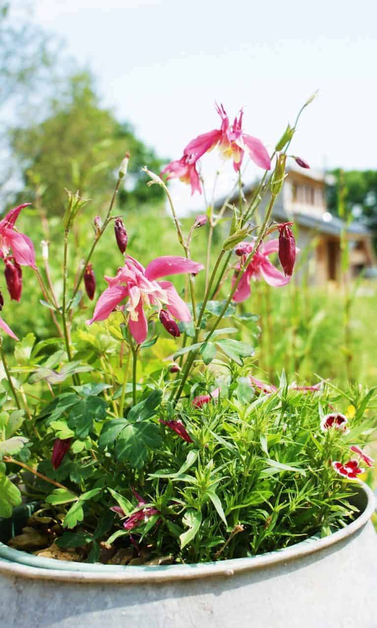 love the wildflower meadow at tiny homes eco cabin holidays isle of wight Click through for more images you'll love