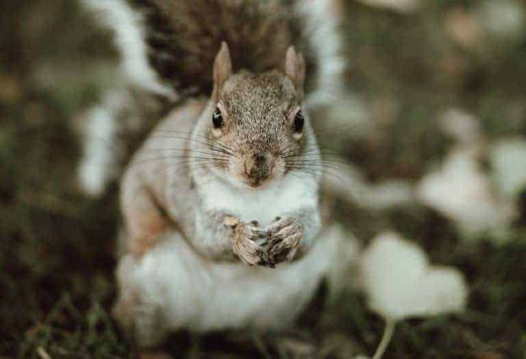love this close up of a squirrel photographed by Anya of Oak and Claw in the Peak District national park