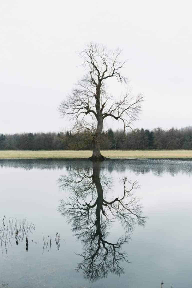 tree reflected in water oak and claw