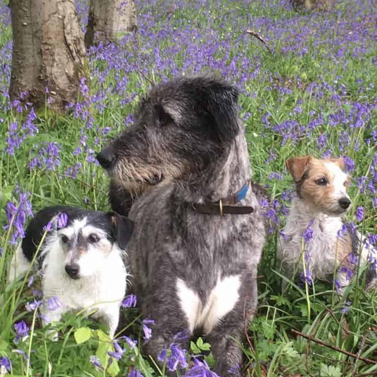 love this image of Real Flower company founder, Rosebie Morton's dogs in her bluebell wood. Click through to discover more of Rosebie's simple pleasures and local loves