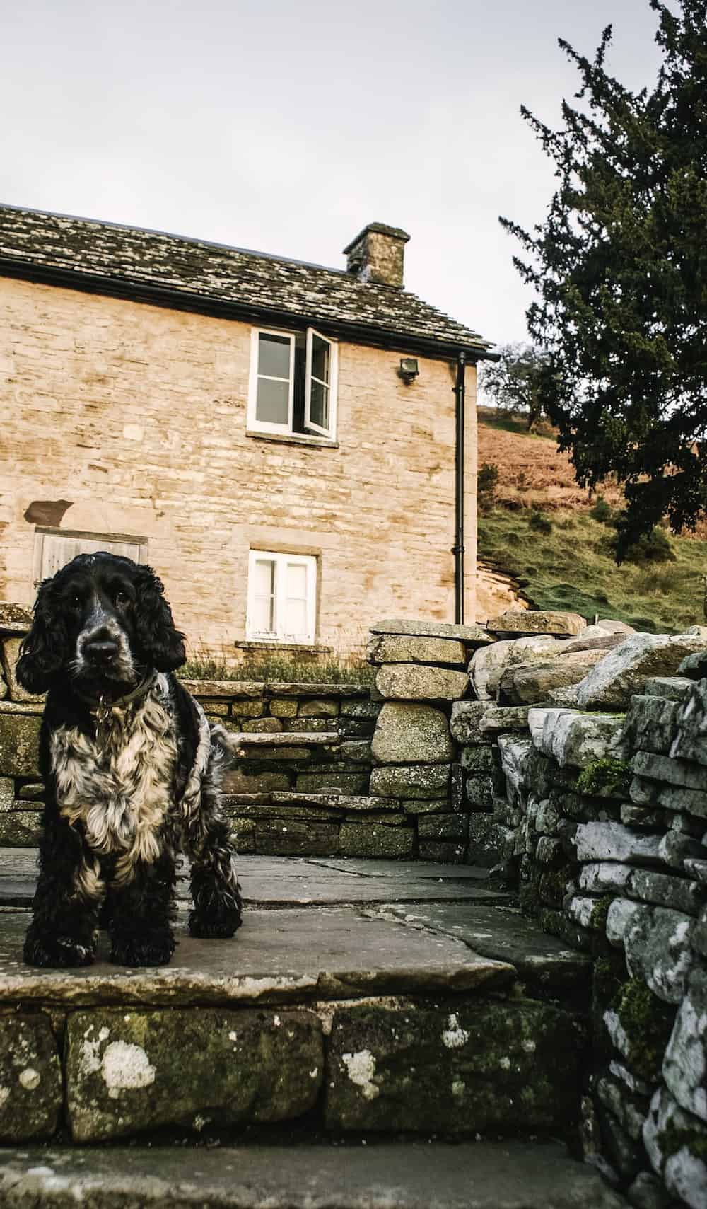 loved our stay at dog friendly welsh holiday cottage patrishow farm in the brecon beacons wales - a simple, contemporary rustic welsh cottage with thick stone walls, slate floors, old wooden doors and windows and spiral stone staircases. Click through to see more beautiful images of the cottage and the area