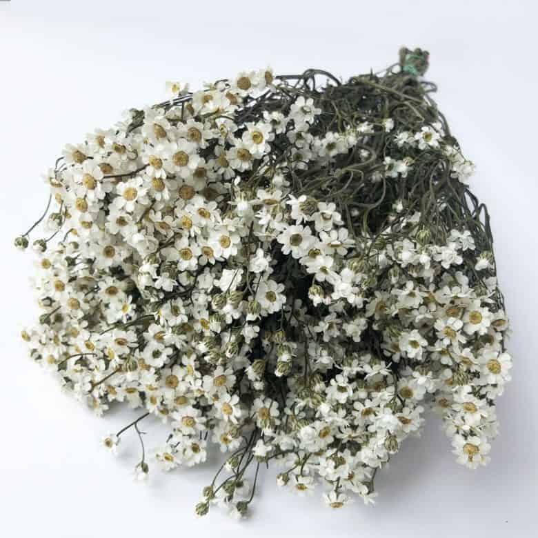 dried white ixodia flowers for botanical hoop art embroidery projects #driedflowers #white