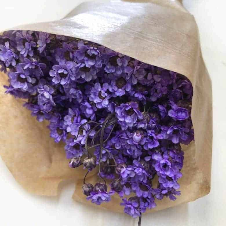 dried lilac ixodia flowers for botanical hoop art embroidery projects #driedflowers #lilac