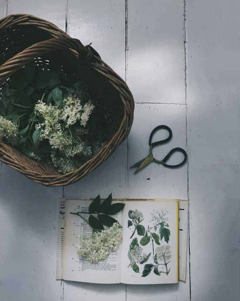 love this elderflower and basket flower flatlay instagram photography by Laura Pashby of Circle of Pine Trees - photographer, blogger and influencer. Click through to see lots of inspiring slow living images as well as info on how to get your free ebook how to create engaging content and photography for instagram and beyond #instagram #ebook #slowliving #photography #frombritainwithlove #circleofpinetrees #flowers #flatlay #elderflower #wildflowers