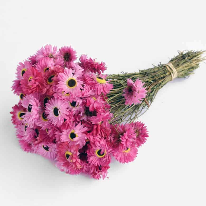 pink rhodanthe dried flowers for botanical hoop art embroidery projects #driedflowers #pink #rhodanthe