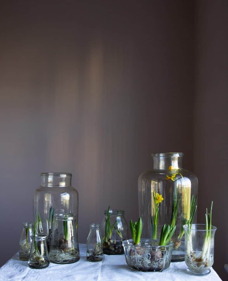spring flower arrangement spring bulbs in glass jars by emma harris of a quiet style flower workshops and instagram ecourses share her tips for finding seasonal inspiration and creativity. Click through to find out more and get some ideas for slow, seasonal living you'll love #instagram #ecourses #slowliving #seasonal #photography #flowerarrangements #frombritainwithove #aquietstyle #springflowers #flowerarrangementideas