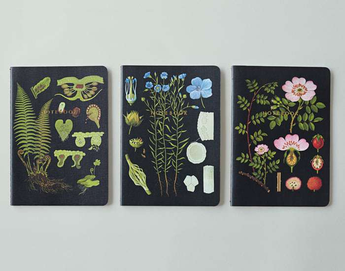 daisy flower farm botanical notebooks