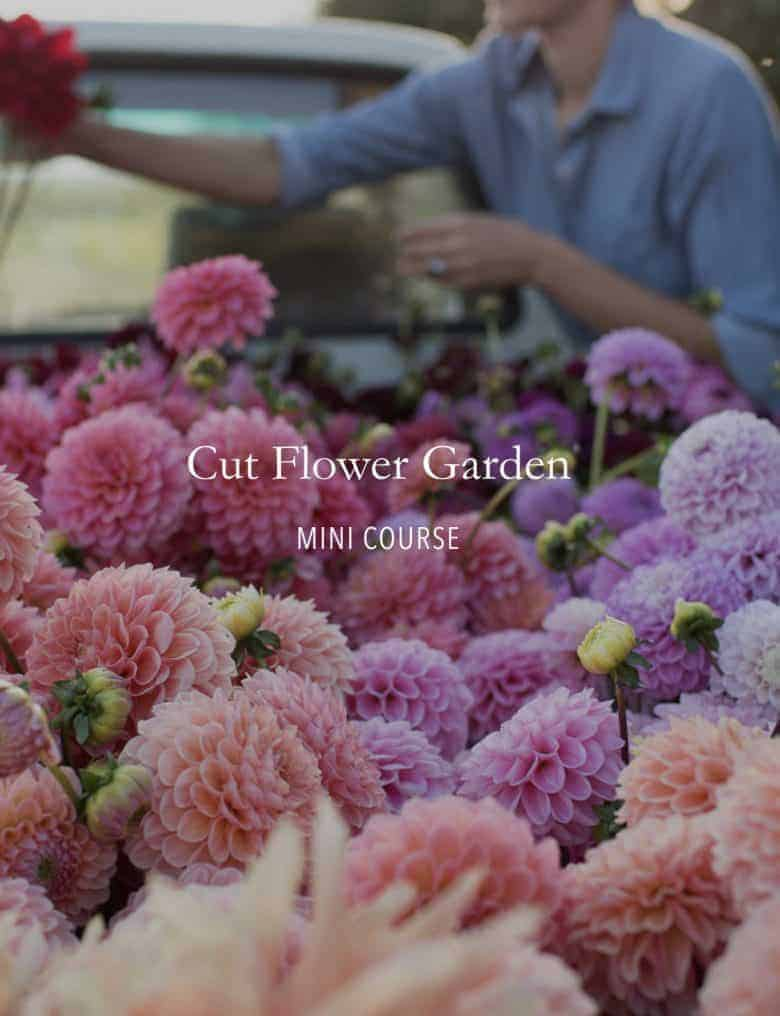 floret cut flower garden free mini course - click through to sign up for the course and learn how to get started with a cutting garden and grow flowers to pick #cuttinggarden #flower #growing #floret #frombritainwithlove