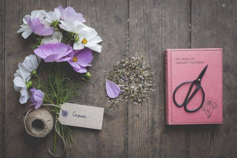 flower photography cosmos flatlay flower photography tips and ideas from photographer Eva Nemeth including expert tips on how to create depth of field, work with light, texture, aperture and f stops to take beautiful flower and garden photographs #flowerphotography #photography #tips #frombritainwithlove #cosmos #flatlay
