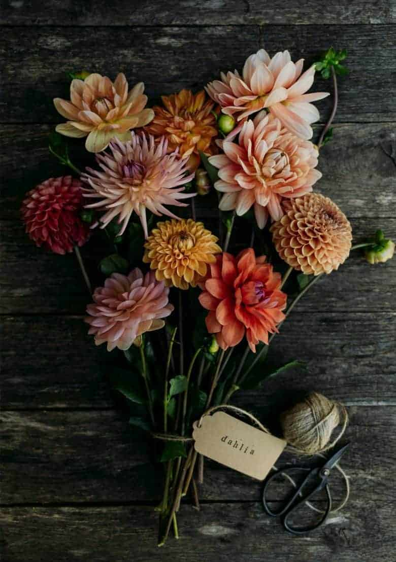 rustic dahlias - flower photography tips and ideas from photographer Eva Nemeth including expert tips on how to create depth of field, work with light, texture, aperture and f stops to take beautiful flower and garden photographs #flowerphotography #photography #tips #frombritainwithlove #dahilas
