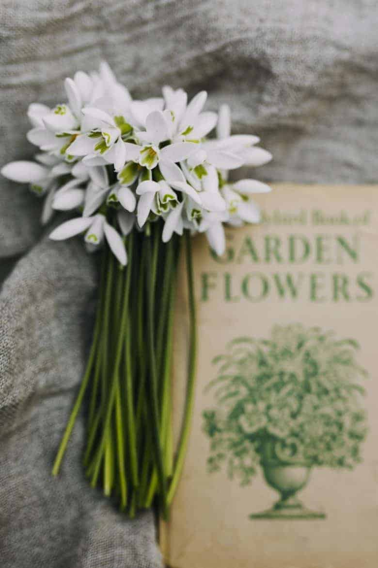 snowdrops with vintage book - flower photography tips and ideas from photographer Eva Nemeth including expert tips on how to create depth of field, work with light, texture, aperture and f stops to take beautiful flower and garden photographs #flowerphotography #photography #tips #frombritainwithlove #snowdrops