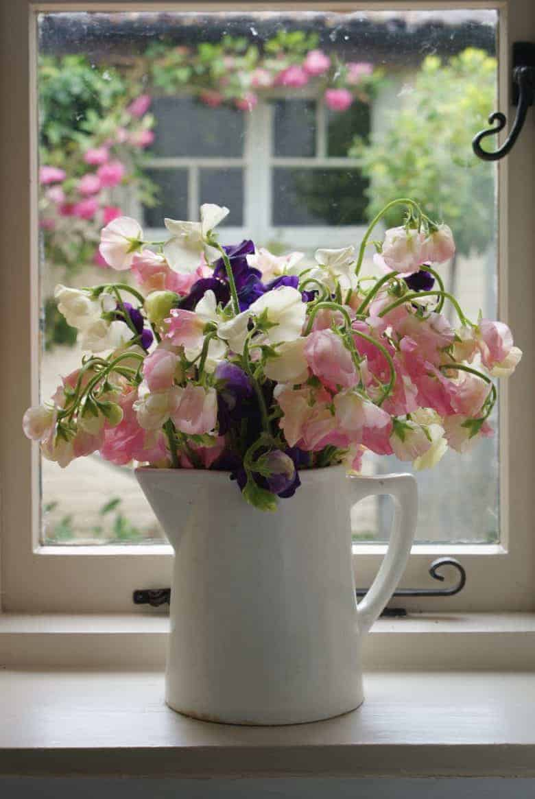 Founder of The Real Flower Company, Rosebie Morton shares her expert tips for growing perfect sweet peas - for colour, scent and beauty - for arranging or for simply enjoying in the garden #sweetpeas #flowers #growing #gardeningtips