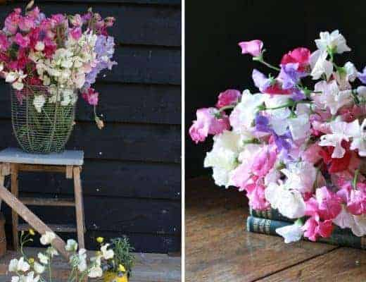 how to grow perfect sweet peas with Rosebie Morton of The Real Flower company. Click through for expert tips and insider ideas to help you grow the most beautiful scented flowers #sweetpeas #flowers #growflowers #frombritainwithlove