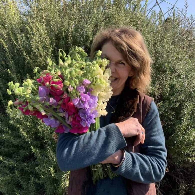 how to grow sweet peas rosebie morton real flower company
