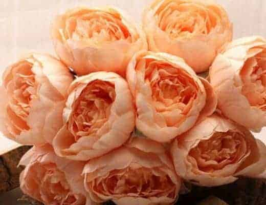 coral peach faux roses peonies flowers