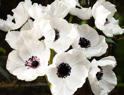 white faux silk poppies flowers