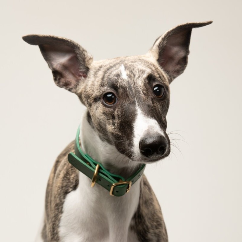dog-collar-leather-green-sustainable