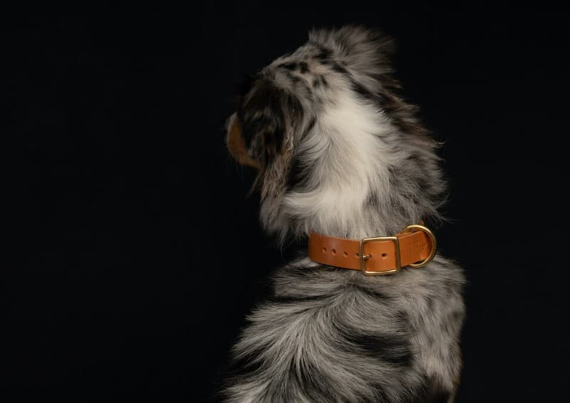 seldom-found-sustainable-leather-dog-collars-leads