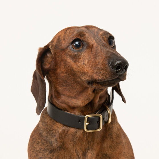 small-dog-puppy-sustainable-leather-collar