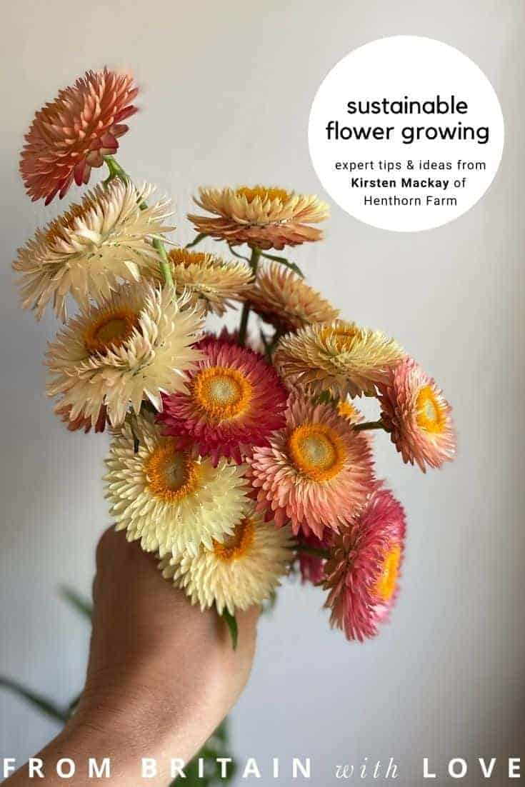helichrysum flowers for drying Kirsten Mackay shares her personal British flowers for drying and preserving as everlastings as well as other seasonal sustainable flower growing tips and ideas #helichrysum #dried #flowers #sustainable #gardening #british