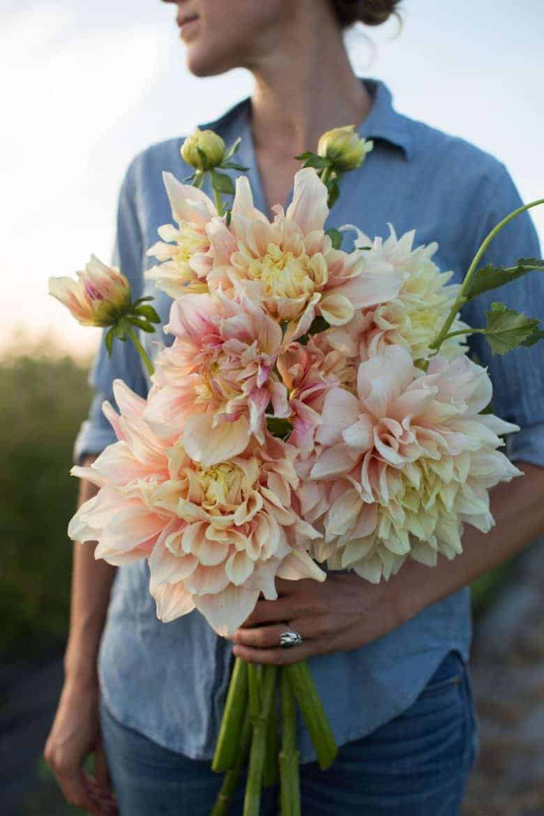 how to grow dahlias Discovering Dahlias book by erin benzakein of floret flower farm dinner plate cafe au lait pale pink dahlias with all the information and expert tips you need to grow and arrange your own beautiful dahlias #dahlias #grow #arrange #floret #erinbenzakein #cafeaulait #dinnerplate