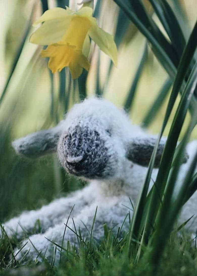 spring lamb free knitting pattern by claire garland aka dot pebbles knits - just one of the seasonal spring craft ideas I've shared for enjoying right now